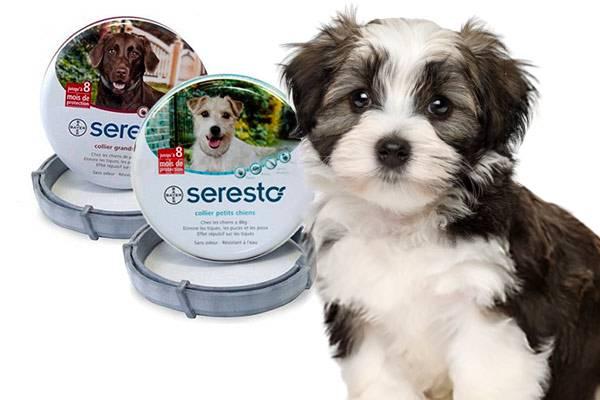 prix raisonnable rechercher le dernier Livraison gratuite dans le monde entier Collier Seresto chien : efficacité, avis, précaution ...