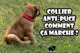Collier Anti Puce Chien Comment ça Marche Auberdog