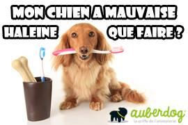 mauvaise haleine chien maladie
