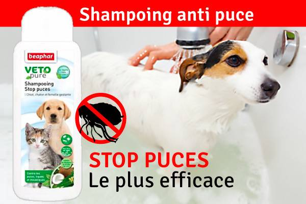 shampoing anti puce chat efficace