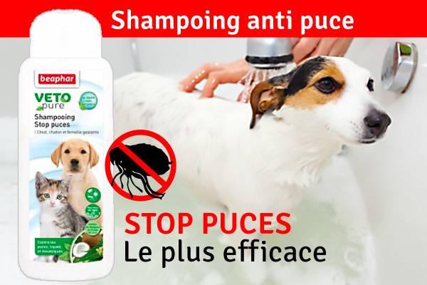 produit pour puce chien et chat