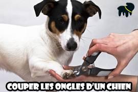 Comment couper les ongles d 39 un chien auberdog - Couper les griffes d un chiot ...