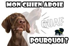 Aboiement De Chien Chien Qui Aboie Pourquoi Auberdog