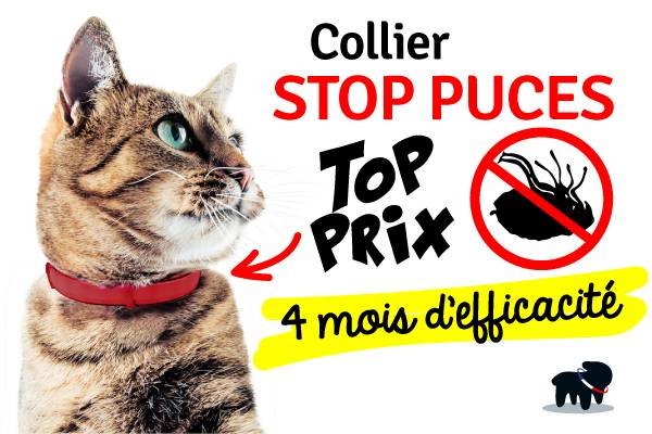 pipette collier anti puce chat