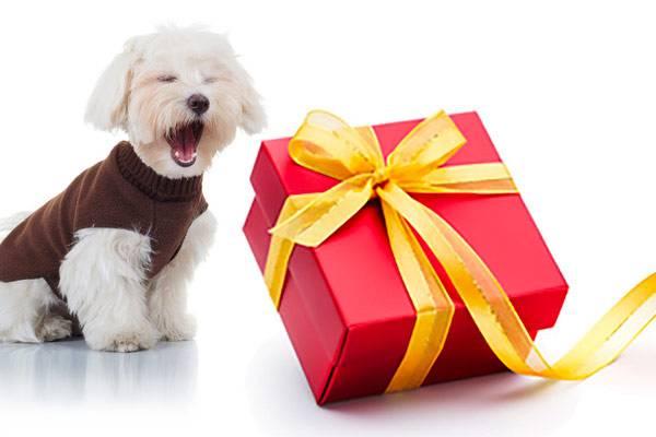 box pour chien id e cadeau pour chien no l auberdog. Black Bedroom Furniture Sets. Home Design Ideas