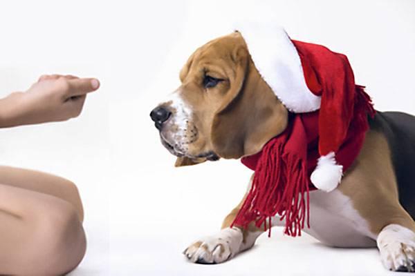 Calendrier De Lavent Pour Animaux.Calendrier De L Avent Pour Chien Noel Des Le 1er Decembre