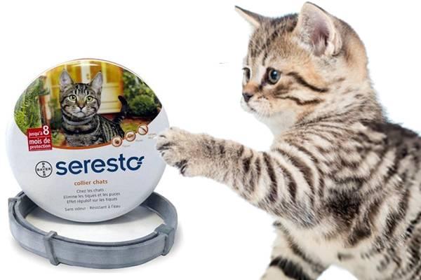 Seresto Chat Collier Anti Puce Efficace Auberdog