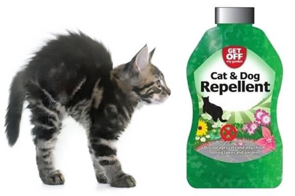 répulsif chat, conseil d'utilisation | auberdog