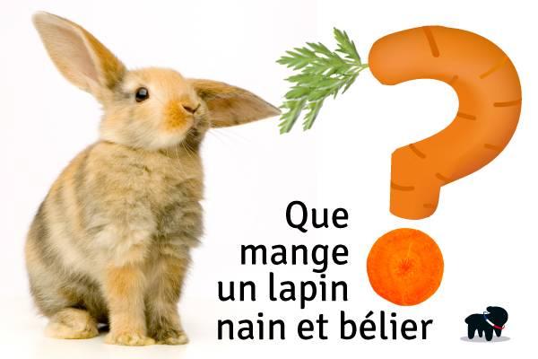 Que Mange Un Lapin Nourriture Lapin Nain Et Belier Auberdog