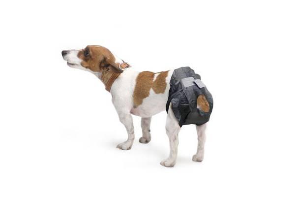 Couche pour chien m le et femelle incontinent ou en chaleur auberdog - Couche pour chien femelle ...