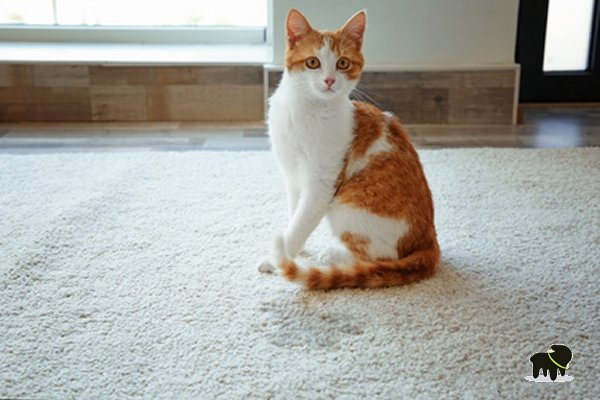 enlever odeur urine chat le produit le plus efficace auberdog. Black Bedroom Furniture Sets. Home Design Ideas
