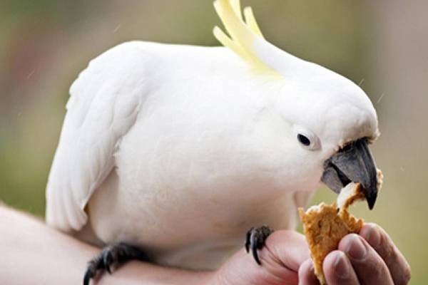 Image result for La nourriture de votre perroquet : bien choisir les graines