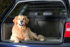 chien malade en voiture causes et solutions auberdog. Black Bedroom Furniture Sets. Home Design Ideas