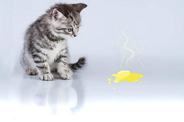 mon chat fait pipi partout comment l 39 emp cher auberdog. Black Bedroom Furniture Sets. Home Design Ideas