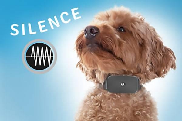 collier pour chien ultra son