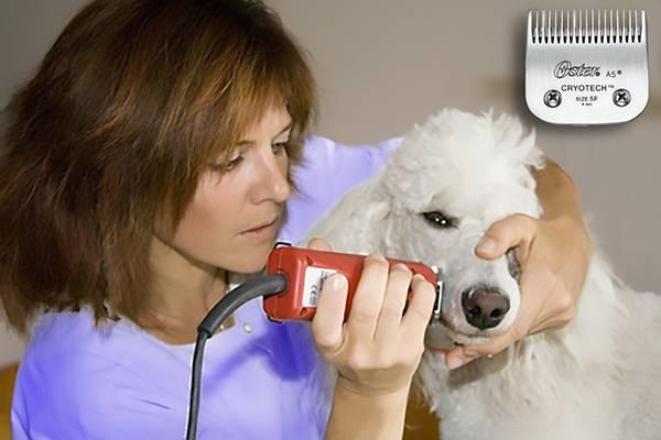 tondeuse pour chien professionnelle laquelle choisir auberdog. Black Bedroom Furniture Sets. Home Design Ideas
