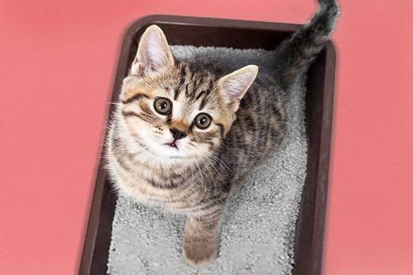litiere chat non bruyante