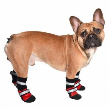 Chaussures Sport rouge pour chien - Bobby