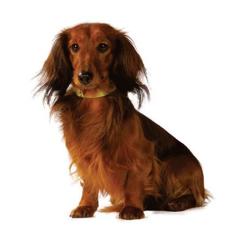 collier chien escapade noir pour chien bobby auberdog. Black Bedroom Furniture Sets. Home Design Ideas