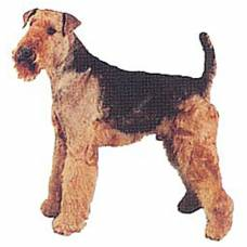 Autocollant Airedale Terrier