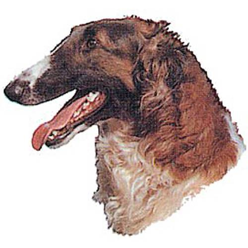 Autocollant Barzoï pour chien - Difac   Auberdog