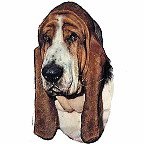 Autocollant Basset Hound pour chien - Difac   Auberdog