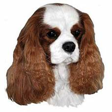 Autocollant Cavalier King Charles