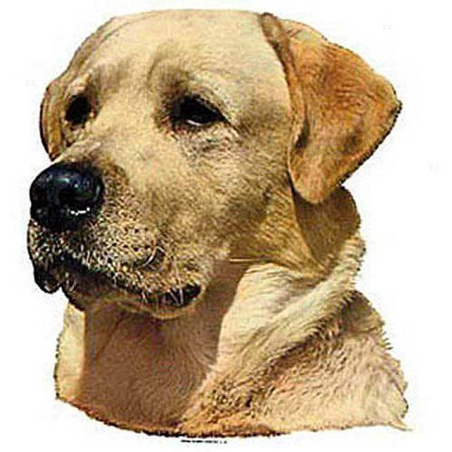 Autocollant Labrador pour chien - Difac   Auberdog
