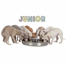 Gamelle Junior inox chiot