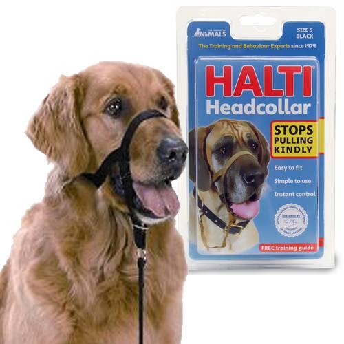 taille de collier pour chien