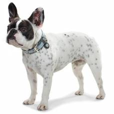 Collier Bouledogue Lima bleu