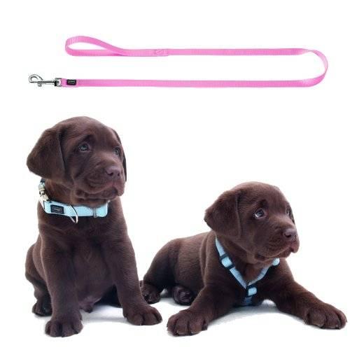 laisse puppy rose ou bleu pour chien hunter auberdog. Black Bedroom Furniture Sets. Home Design Ideas
