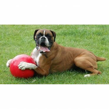 boomer ball, ballon indestructible pour chien
