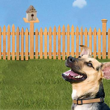 Syst me anti aboiement pour l 39 ext rieur pour chien for Repulsif chien exterieur efficace