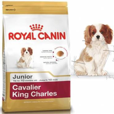 royal canin croquettes cavalier king charles junior pour. Black Bedroom Furniture Sets. Home Design Ideas