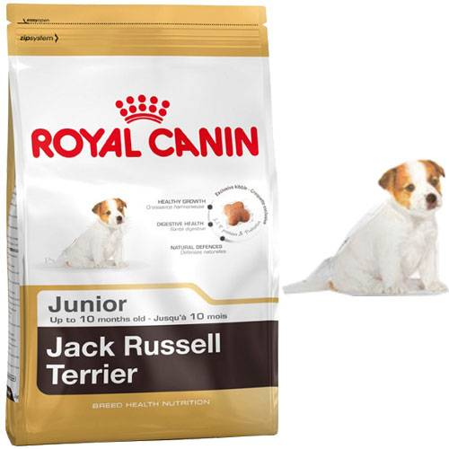 croquettes jack russell terrier junior pour chien royal. Black Bedroom Furniture Sets. Home Design Ideas