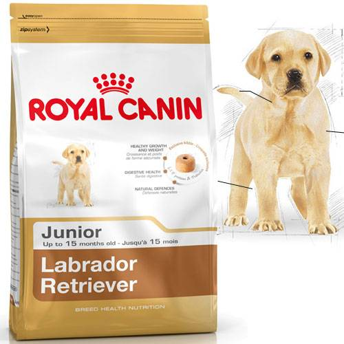 croquettes labrador retriever junior pour chien royal canin auberdog. Black Bedroom Furniture Sets. Home Design Ideas