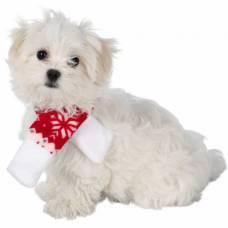 Collier chien, laisse et harnais pour chien   Auberdog a7860ee7f56c