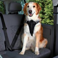 Harnais chien voiture Dog Protect
