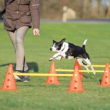 Set d'obstacle Dog Activity