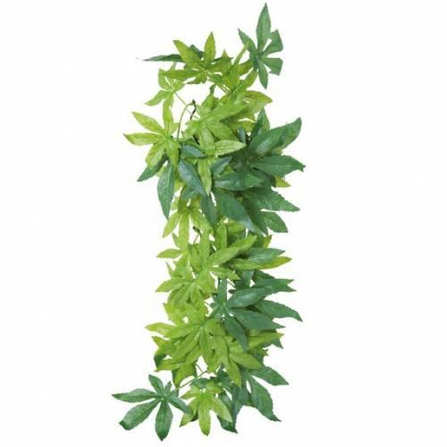 plante abutilon pour terrarium pour reptile trixie auberdog. Black Bedroom Furniture Sets. Home Design Ideas