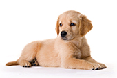 Auberdog - menu chien