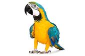 Auberdog - menu oiseau